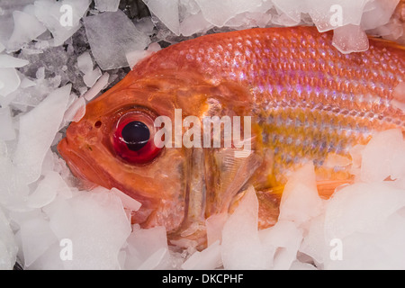 Red Snapper for sale at a fishmonger's store in the Pike Place Market, Seattle, Washington State, USA - Stock Photo