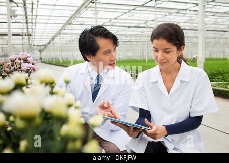 Man and woman with rows of plants growing in greenhouse - Stock Photo