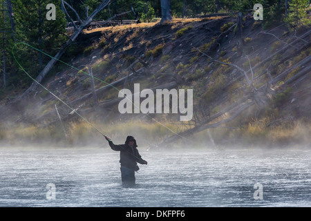 Fly fisherman casting in the early morning fog in the Madison River, Yellowstone National Park, UNESCO Site, Wyoming, - Stock Photo