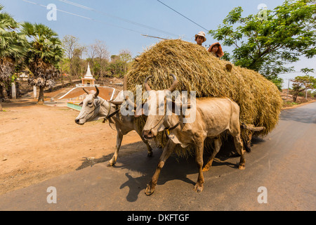Ox drawn cart near Wat (Phnom) Hanchey, on the Mekong River, Kampong Cham Province, Cambodia, Indochina, Southeast - Stock Photo