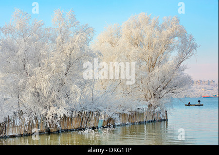 winter trees covered with frost - Stock Photo