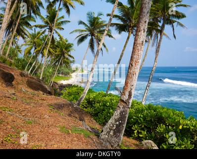 Palm trees close to Mirissa beach, Sri Lanka - Stock Photo