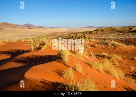 The red oxidised sand of the NamibRand dunes, Namib Desert, Namibia, Africa - Stock Photo