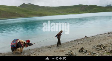 Tibetan farmer with decorated Yak at Yamdrok Lake, Nagarze, Shannan, Tibet, China - Stock Photo