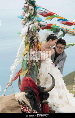 Yak in front of a newlywed couple with prayer flags, Yamdrok Lake, Nagarze, Shannan, Tibet, China - Stock Photo