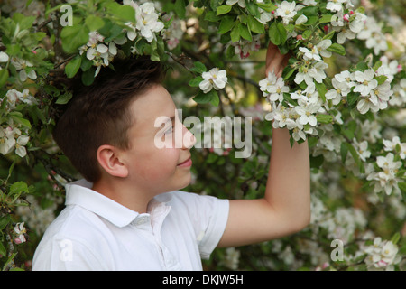 Young boy under a blooming apple tree in spring - Stock Photo