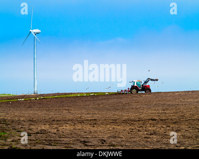 Farmer ploughing a field with wind turbine in background and gulls behind red tractor Isle of Tiree Inner Hebrides - Stock Photo