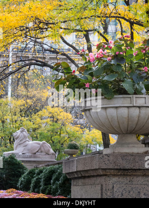 Lion Statue, Fortitude, New York Public Library, Main Branch, NYC - Stock Photo