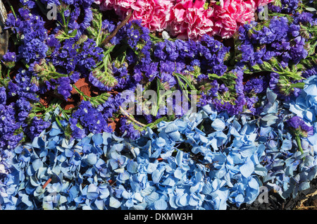 flower background with stripes of different colored flowers - Stock Photo