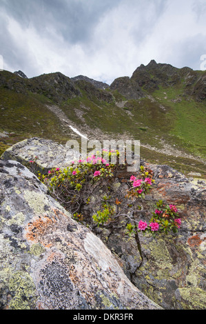 Europe Tyrol Tirol uplands Austria Alps alpine mountain mountain landscape mountain scenery landscape idyll mountainous - Stock Photo