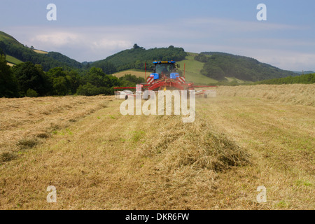 Contractor with a New Holland T7030 tractor and a SIP hay rake, raking hay for baling on an Organic farm. Powys, - Stock Photo