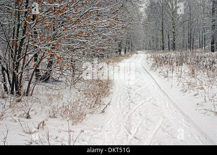 Winter orienteering ski traces in park. - Stock Photo