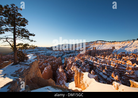 the hoodoos in the Amphitheatre of Bryce Canyon in winter at dawn, Utah, USA - Stock Photo