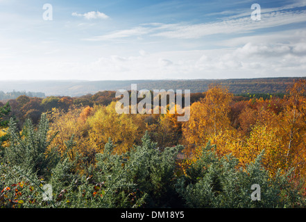 The Forest of Dean in Autumn, seen from New Fancy View. Gloucestershire. England. UK. - Stock Photo