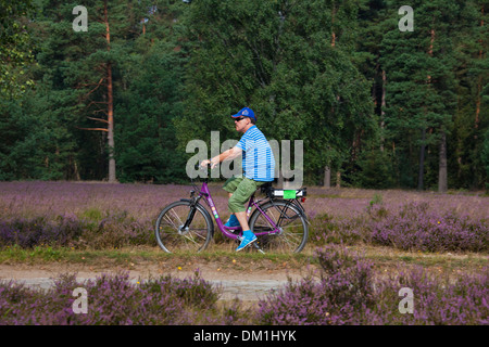 Tourist on electric bicycle cycling through the Lüneburg Heath / Lunenburg Heathland in summer with heather flowering, - Stock Photo