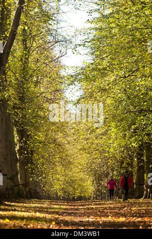 A couple walk along the Lime Tree Avenue at Clumber Park, near Worksop, Nottinghamshire. 1st November 2013. - Stock Photo