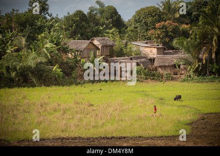 Village and rice paddies in Fenerive Est District, Madagascar - Stock Photo
