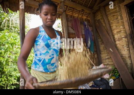 A girl winnows rice in rural Fenerive Est, Madagascar. - Stock Photo