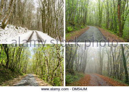 Country road through hardwood oak forest, composite image showing same scene in four seasons (Winter, Spring, Summer, - Stock Photo