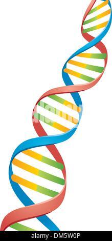 Double Helix DNA Strand - Stock Photo