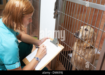 Veterinary Nurse Checking On Dog In Cage - Stock Photo