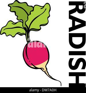 Red Radish - Stock Photo