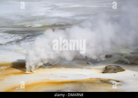 Double Steam Vent in Norris Geyser Basin Yellowstone National Park Wyoming. USA LA006804 - Stock Photo