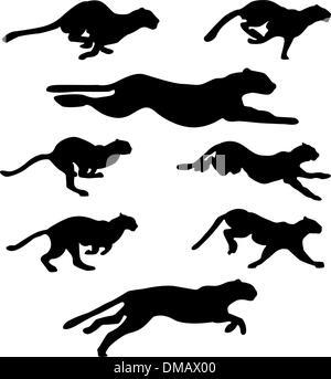 wildcats set - Stock Photo