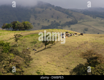 rolling farmland and grazing pasture in Costa Rica near San Jose, the capital. - Stock Photo