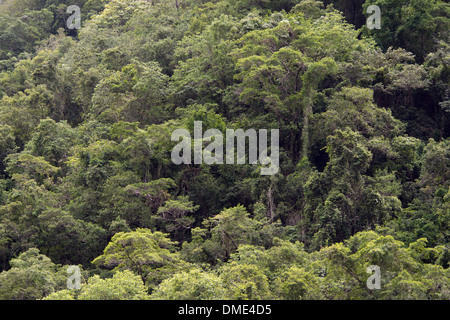 Rainforest near Cairns, Queensland, Australia - Stock Photo