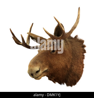 Moose head on a white background (Alces alces), isolated - Stock Photo