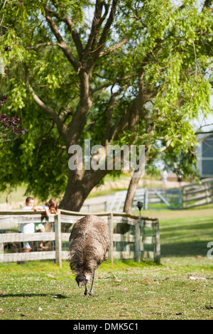Kids pets the nose of a camel at Abrams animal farm in front of Manisses cottage on Block Island in New England - Stock Photo