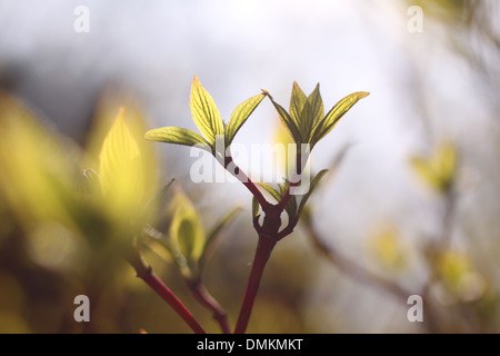Young leaves of bush in spring time - Stock Photo