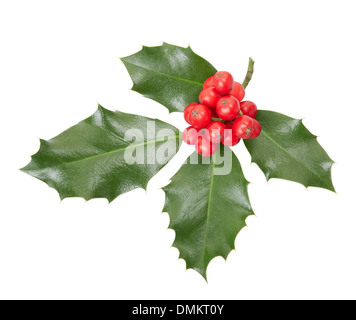 Holly twig, Christmas decoration isolated on white, clipping path included - Stock Photo