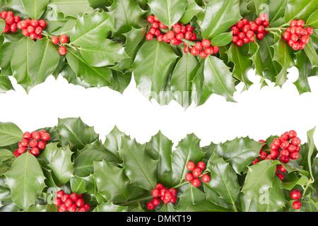 Holly border, Christmas decoration - Stock Photo