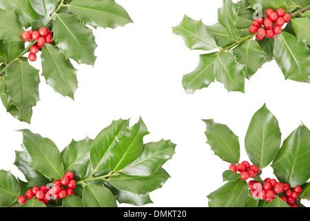 Holly twig border, Christmas decoration - Stock Photo