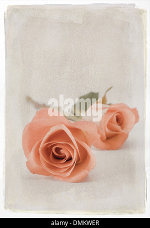 Two orange roses with textured overlay - Stock Photo