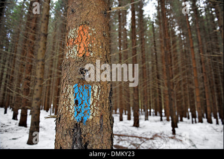 Old tourist routes markings with red cross and blue strip on a fir tree - Stock Photo