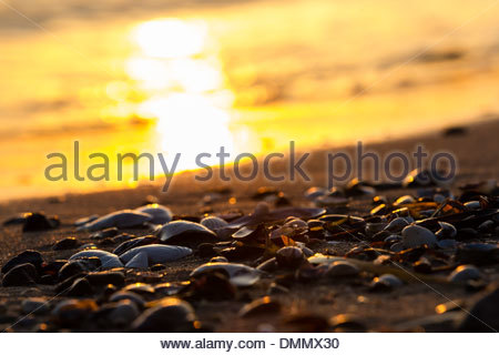 Germany, Baltic Sea, Bay of Luebeck, beach with shells during sunset - Stock Photo