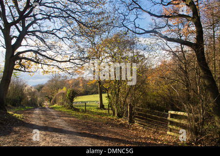 A Herefordshire country lane in autumn near Much Marcle, Herefordshire, England, UK - Stock Photo