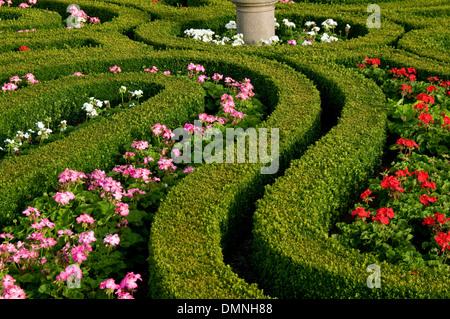 pitmedden formal garden with privet by national trust scotland - Stock Photo