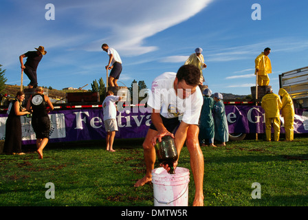 Grape Stomping Competition at Festival of the Grape, Oliver, BC, British Columbia, Canada - Okanagan Valley, Wine - Stock Photo