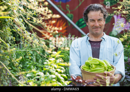 Summer on an organic farm. A  man holding a basket of fresh picked vegetables. - Stock Photo