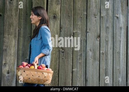 A woman carrying a basket of freshly picked fruit. Plums and peaches. - Stock Photo