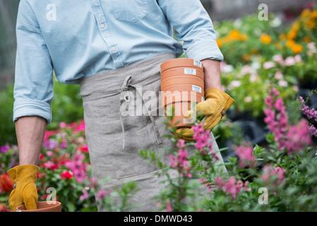 An organic flower plant nursery. A man carrying plant pots. - Stock Photo
