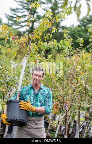 An organic flower plant nursery. A man working carrying a sapling tree in a pot. - Stock Photo