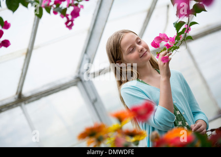 An organic flower plant nursery. A young girl looking at  flowers. - Stock Photo