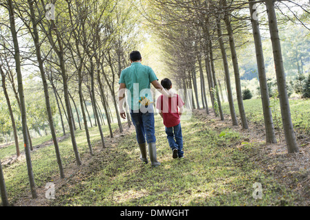 A man and a young boy walking down an avenue of trees. - Stock Photo