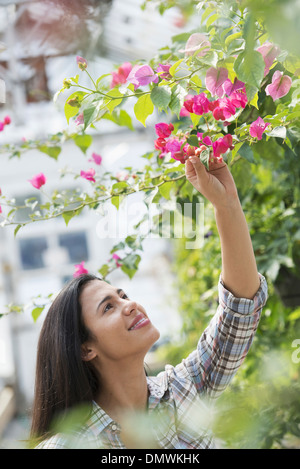 A woman in an organic nursery greenhouse. - Stock Photo