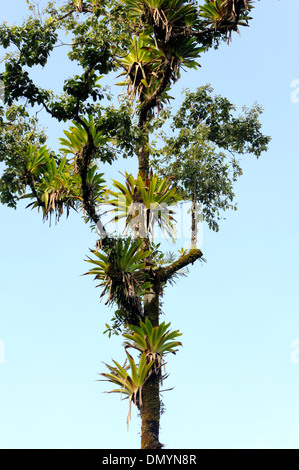 epiphytes and tropical trees relationship quotes